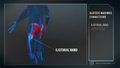 Cellucor Built By Science Trainer: Legs