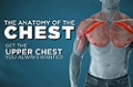 Video Article: The Anatomy Of The Chest With Jim Stoppani